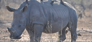 "3 Night 4 Day ""Big 5"" Kruger Park Safari"